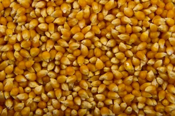 Popcorn_-_Studio_-_2011